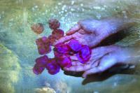 petales-de-roses-ds-les-mains-1.jpg
